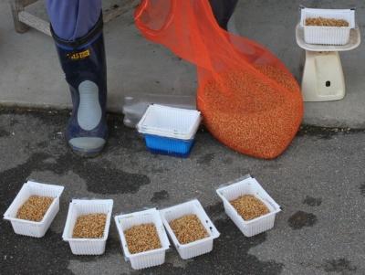 自然栽培米