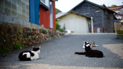 田代島 石巻市