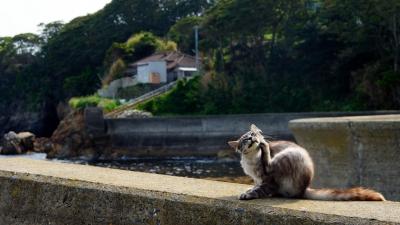 田代島 猫