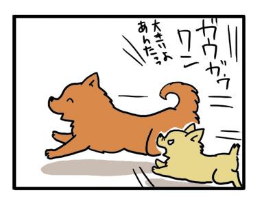 ドッグラン ラン デビュー チワワ Chihuahua 犬 吠える ガウリン 福 吠 漫画 イラスト 絵 犬の漫画 犬漫画 manga Cartoon
