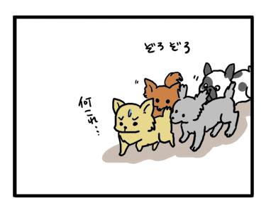ドッグラン ラン デビュー チワワ Chihuahua 犬 吠える ガウリン 福