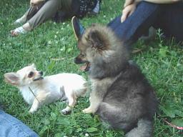 小犬 福 マル