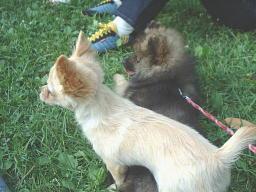 マル 福 仲良し 小犬