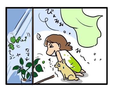 台風 犬 鑑賞
