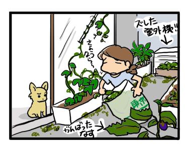 台風 ベランダ ガーデニング ゴーヤ 終 イラスト
