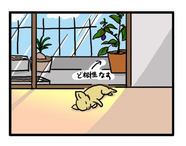 福 昼寝 チワワ 日向ぼっこ イラスト 漫画
