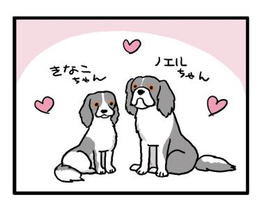 ノエル きなこ キャバリエ キャバリア 犬 イラスト