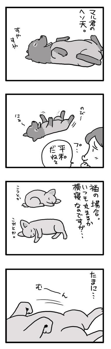 寝る 犬 へそ天