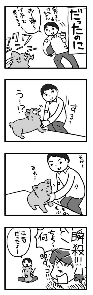福 チワワ 吠える ガウリン 吠 犬 なれる 漫画 マンガ まんが