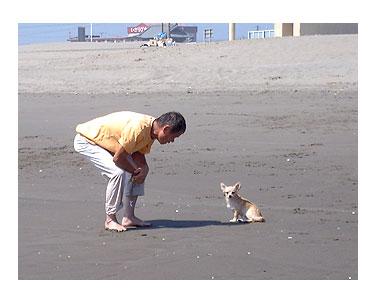 海 犬 千葉 チワワ ポメ 小犬 じゃれる 老人 まんが マンガ 漫画