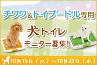 チワワ トイプ 小型 犬 トイレ 専用