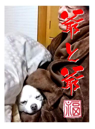 爺 犬 チワワ お爺ちゃん 同士