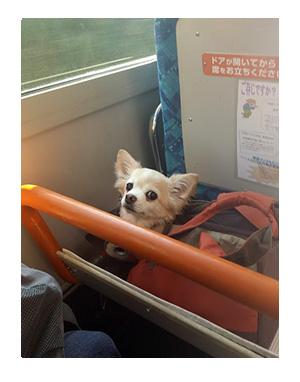 箱根 はこね 犬 犬連れ ペット 旅行 ロマンスカー