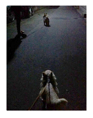香港 旅行 犬 明け方 散歩 暗 田舎