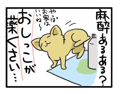 福 歯 チワワ 犬 抜歯 まんが 漫画 マンガ 犬
