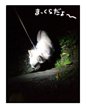八王子 夕焼け ホタル 小川 公園 チワワ 犬