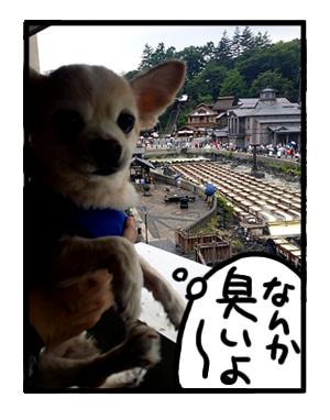 草津 温泉 犬 チワワ ペット 湯