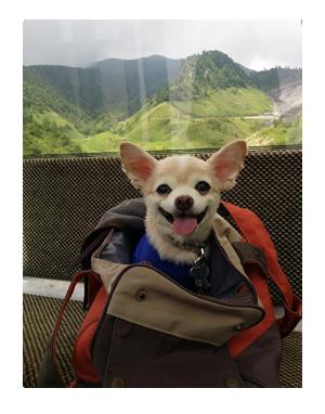 草津 ワンコ 犬 温泉 宿 宿泊 観光 ハイキング