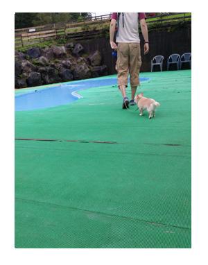 福 プール 犬 チワワ リゾート 泳ぐ 宿泊 施設 ペット