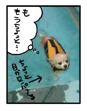 泳ぐ 福 プール チワワ 犬 救命 ライフ ジャケット