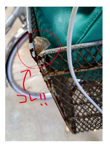 カマキリ 自転車 タマゴ 卵