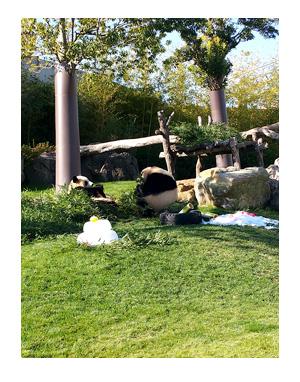 アドベンチャーワールド 和歌山 パンダ 子 動物 キリン カバ