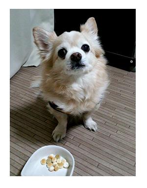 バレンタイン チョコ ファウンテン 犬 ワンコ フルーツ ボーロ 野菜