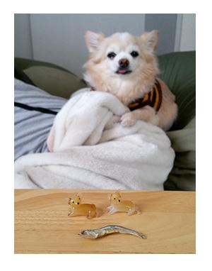 チワワ  クリスタル 犬 ガラス 置物