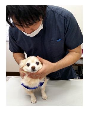 福 健康診断 老犬 目 白内障 星状硝子体 核硬化症