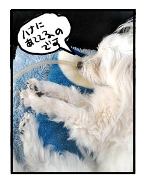トク 心臓 心臓肥大 犬 漫画 マンガ まんが 病