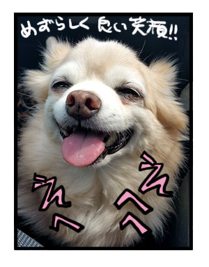 宮ヶ瀬ダム 吊り橋 犬 わんこ 船 関東 ダム 広場あい 固