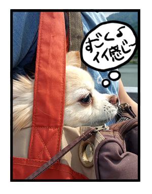 宮ヶ瀬ダム バッグ 犬 チワワ 福