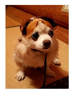 鈴鹿 サーキット 犬 サングラス ヘルメット バイク BIKE! まんが 漫画