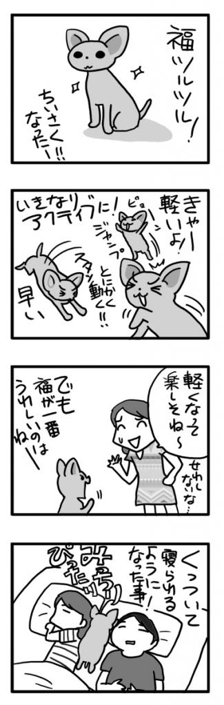サマーカット 毛 毛刈 犬 チワワ くっつく 甘 まんが 漫画 マンガ