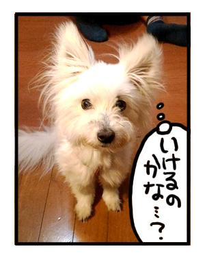 犬 旅 和歌山 車 旅行 心臓 病