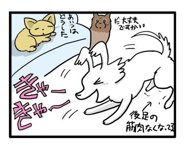 トク 元気 心臓 旅行 和歌山 近畿 犬 マンガ 漫画 まんが