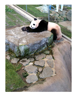 アドベンチャー ワールド ランド 和歌山 パンダ 動物 サファリ 老人