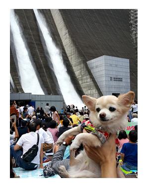 宮が瀬ダム みやがせ だむ ダムカレー 東京 多摩 八王子 都心 犬 バイク チワワ