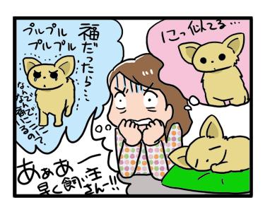 迷子 犬 チワワ 小平 花小金井 南 水路