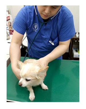 病院 動物病院 健康診断 検診 チワワ 福 肝臓 数値