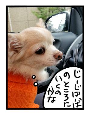 伊豆 いず 足柄 ワンコ 犬 犬連 ドッグラン 金太郎 ペット