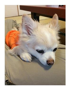 伊豆 温泉 世界遺産 韮山 反射炉 にらやま 犬 わんこ ペット