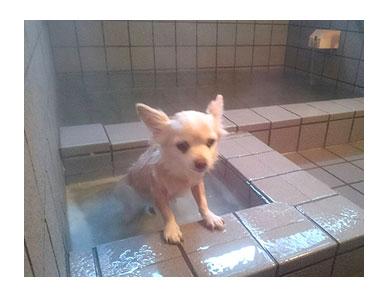 犬 風呂 伊豆 温泉 専用 わんこ 一緒