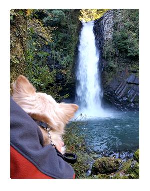 浄蓮の滝 犬 わんこ 旅 じょうれん