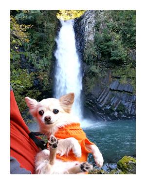 常連の滝 犬 わんこ 旅 じょうれん