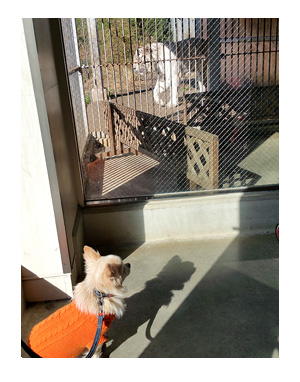 アニマル キングダム 動物園 犬 ペット 一緒 伊豆