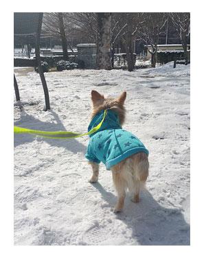 福島 東北 犬 連れ 旅 ペット 雪 車