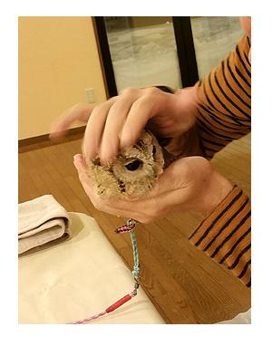 東北 福島 フクロウ ふくろう なで 触 ペット 犬 宿