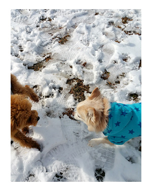 東北 旅行 犬 ワンコ 旅 ペット 雪 やきそば 漫画 マンガ