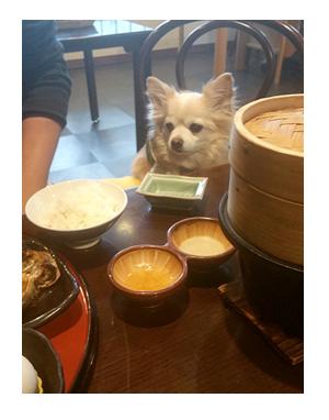 箱根 犬 連れ 旅館 ホテル 温泉 ペット 宿泊 漫画 マンガ イラスト